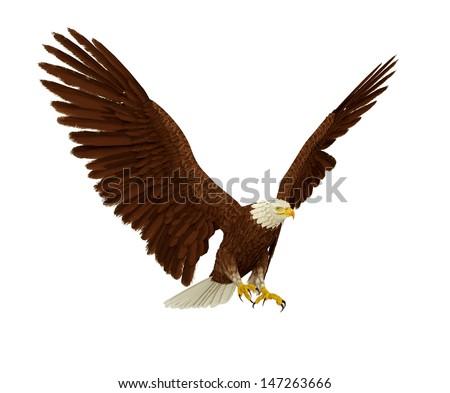 eagle fly - stock photo