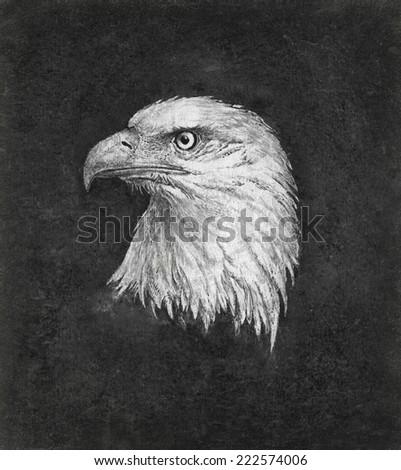 Eagle head  - stock photo