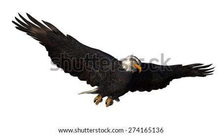 eagle - isolated on white background