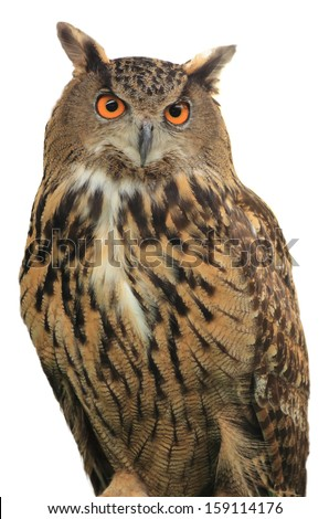 Eagle Owl/An eagle owl on isolate white background - stock photo