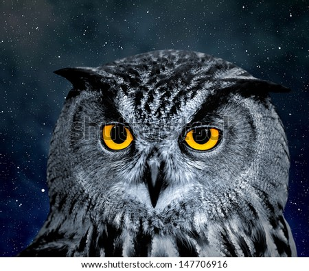 Eagle Owl, Bubo bubo  - stock photo
