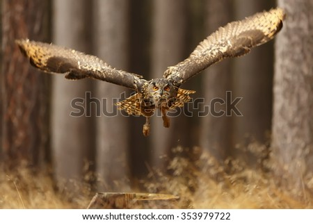 eagle owl flying from forest - stock photo