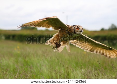 Eagle owl in flight - stock photo