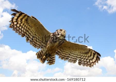 Eagle Owl in Flight - stock photo