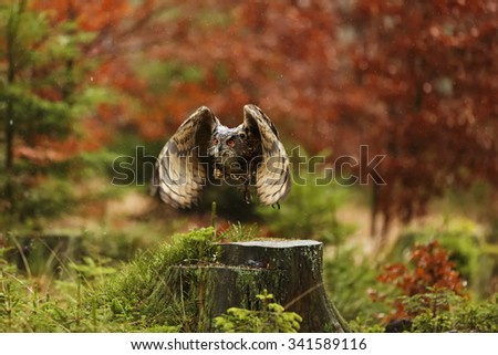 eagle owl is flying in forest with nice background - stock photo