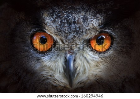 eagle owl looking out of the darkness close up - stock photo