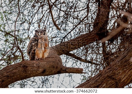 Eagle Owl on the tree - stock photo