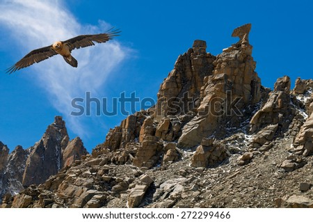 Eagle soaring near sacred for Buddhists the rock Karma Axe near Mount Kailas in Tibet. - stock photo