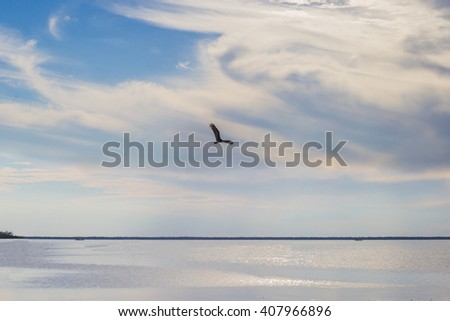Eagle soars over the lake at sunset - stock photo