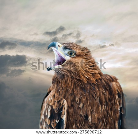 eagle with peak open against the skies - stock photo
