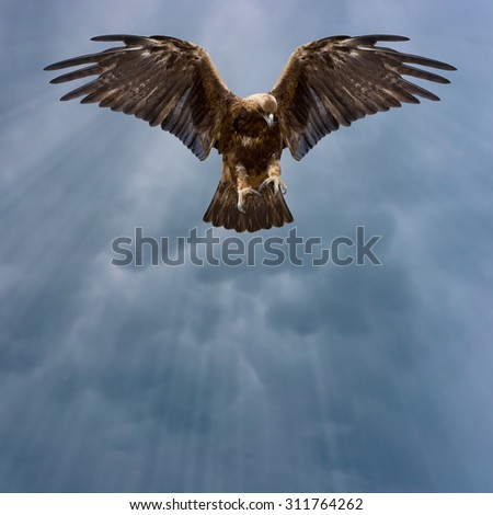 eagle with spread wings in the dark sky