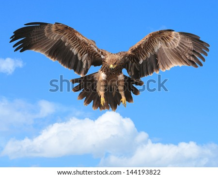 Eagles flying in the sky Backdrop - stock photo
