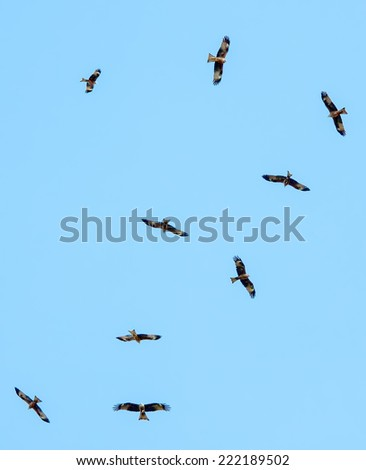 eagles  flying over blue sky - stock photo