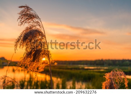 Ear against the sunset sky and lake - stock photo
