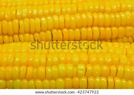Ear of corn - food background - stock photo