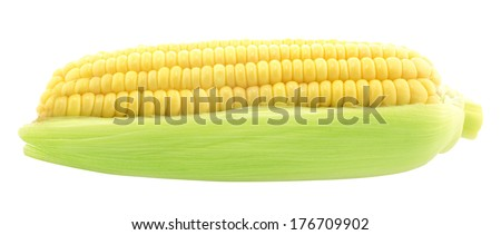 ear of corn isolated on a white background (with clipping work path) - stock photo