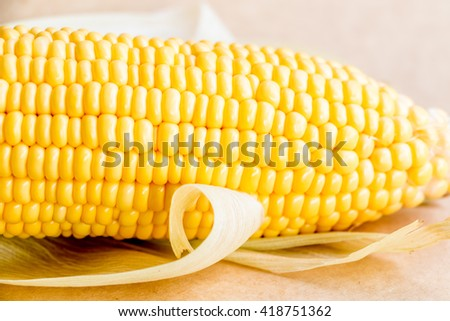ear of Corn on background.