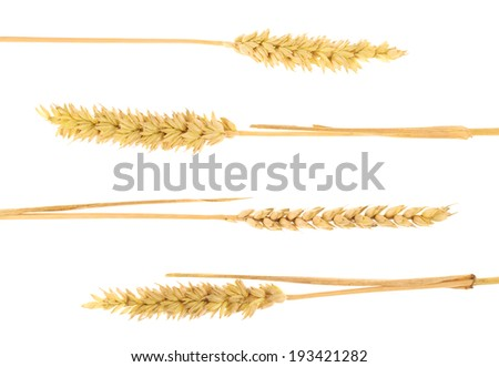 Ear of rye isolated over the white background, set of five - stock photo