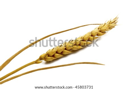 Ear of wheat on the white background with shadow