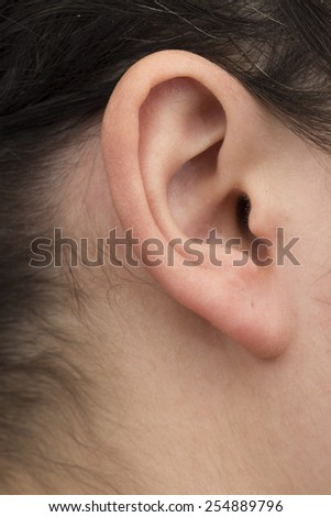 ear on the white background