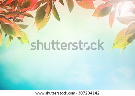 Early autumn day with red leaves as background - stock photo
