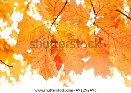 Early autumn in the park with view on colorful tree leaves, day time; note shallow depth of field