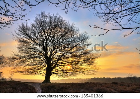 Early, cold winter morning at the Posbank in the Netherlands with a rising sun behind a big free standing tree. HDR - stock photo