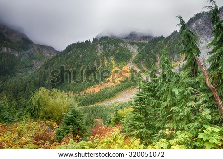 Early fall colors on the misty Wonderland Trail in Mount Rainier National Park, Washington. - stock photo