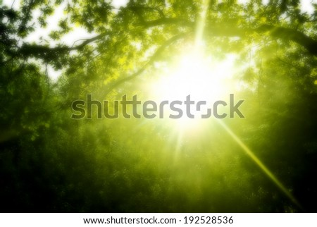 Early in the morning the sun hardly makes the way through dense foliage of trees. Added diffusion effect - stock photo
