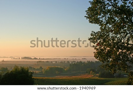 Early morning colors shining over a vineyard - stock photo