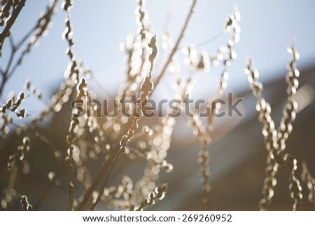 early morning feeling with buds on twig and sunshine - stock photo