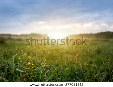 early morning field of flowers,natural summer background - stock photo