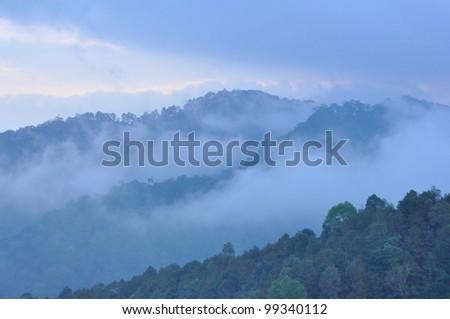 Early morning fog in the mountains Sakura pink flower Khun Mae Ya. Chiang Mai, Thailand. - stock photo