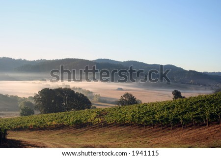 Early morning fog in vineyards and hills - stock photo