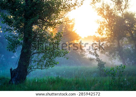 Early morning landscape in forest - stock photo