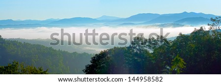 early morning nature on blue ridge parkway