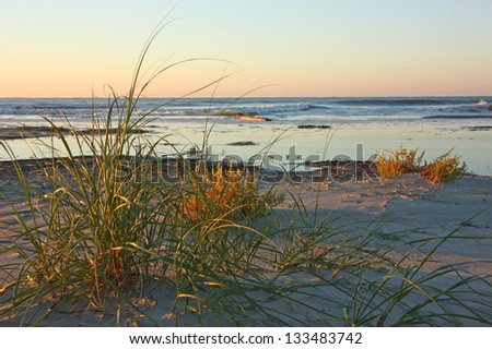 Early morning on an ocean beach with vegetation - stock photo