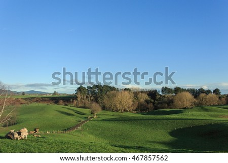 Early morning, overlooking farmland in New Zealand