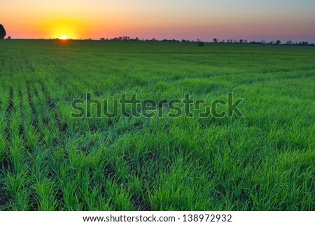 early morning rural scene - stock photo