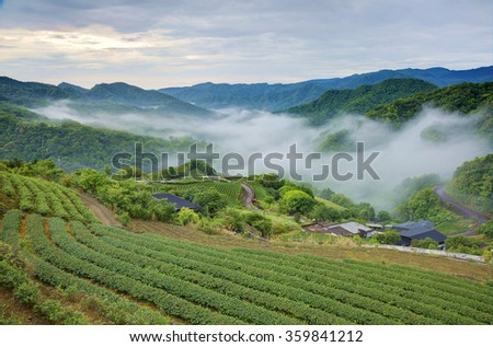 Early morning scenery of tea gardens in fresh spring atmosphere with ethereal fog in the distant valley, Ping-ling, Taipei Taiwan - stock photo