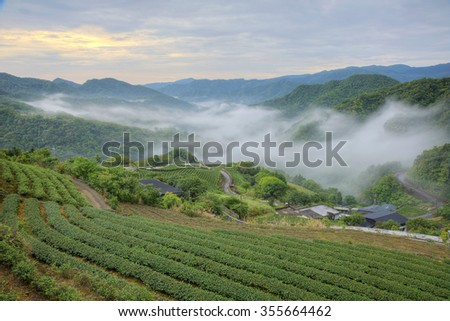 Early morning scenery of tea gardens with ethereal fog in the distant valley, in Ping-ling, Taipei Taiwan - stock photo