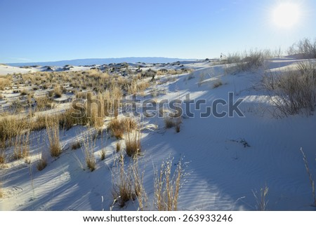 Early Morning View of Sun and Desert Plants at White Sands  - stock photo