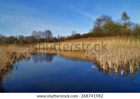 Early spring at the pond - stock photo
