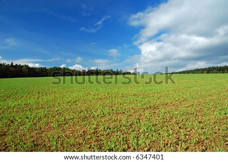 Early spring field with green grass and blue sky - stock photo