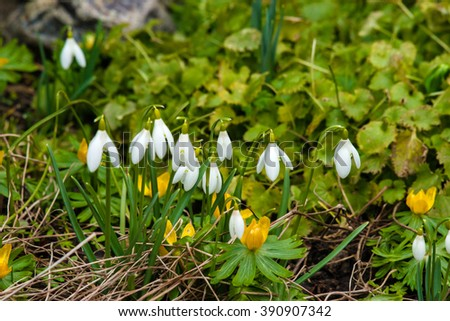 Early spring flowers in a garden in march