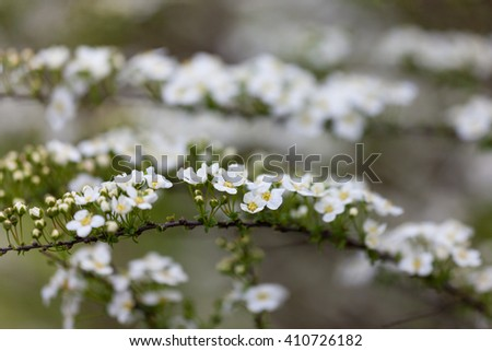 Early spring flowers on a glade in the forest - stock photo