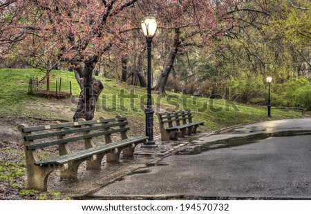 Early spring in Central Park, New York City with cherry trees after rain storm - stock photo