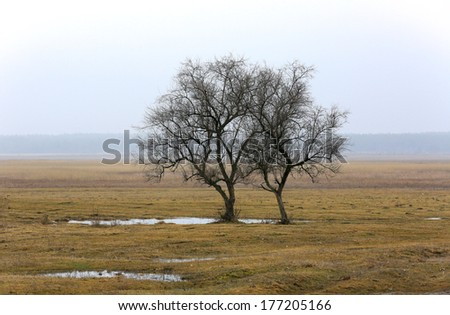 Early spring on misty medow with two alone trees