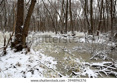 early spring time scene in forest with bog - stock photo