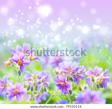 early summer flowering geranium - stock photo